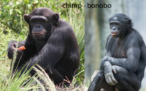 THE BONOBO BIG BANG AND THE WORLD OF ALIENS:, short story ...