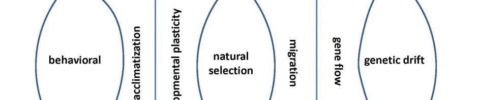 Schell's Adaptation & Evolution Model