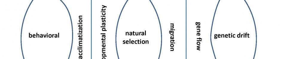 Schell's Adaptation & Evolution Model
