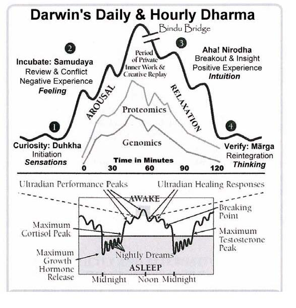 "Ernest Rossi's ""Darwin's Daily & Hourly Dharma"" (from Rossi, Schirmer, & Rossi 2010, European Journal of Clinical Hypnosis, 10(1):63)."