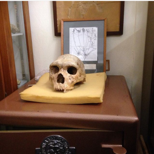 We got to see the real Petralona skull (160-200kyo) in the Geology Dept in Aristotle University.