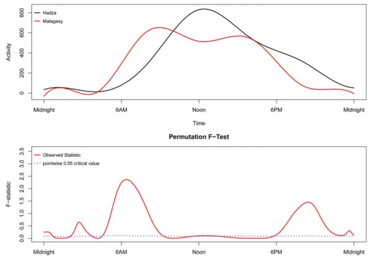 A functional linear modeling comparison between the 24-hr sleep-wake pattern of the Hadza and a small scale agricultural society in Madagascar characterized as nocturnally bi-phasic, segmented sleepers. The Madagascar population showed a pronounced increased activity after midnight and a pronounced decrease in activity around noon, whereas the Hadza showed continually increased activity from sleep's end until noon when activity showed a steady decrease until a prolonged consolidated bout of sleep in early morning. The bottom panel illustrates the point-wise critical value (dotted line) is the proportion of all permutation F values at each time point at the significance level of 0.05. When the observed F-statistic (solid line) is above the dotted line, it is concluded the two groups have significantly different mean circadian activity patterns at those time points [Color figure can be viewed at wileyonlinelibrary.com]